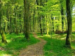 Forêt de Balleroy